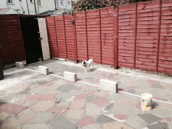 Stitch inspecting the area before I paint the crazy paving